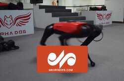 VIDEO: Chinese tech company develops robot dog